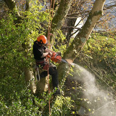 Tree Removal in Greensboro