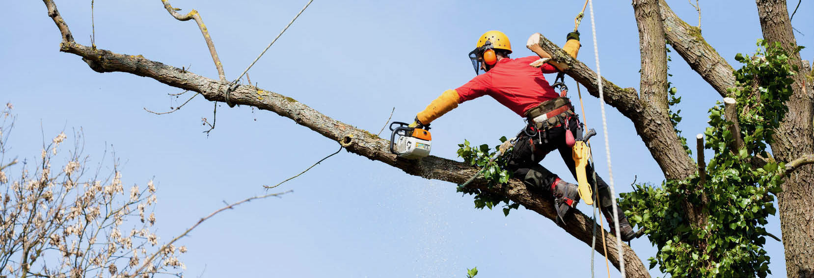 Greensboro Tree Service Banner