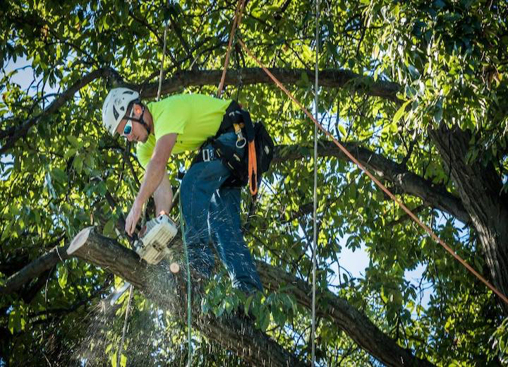 Tree Care Work, Greensboro NC