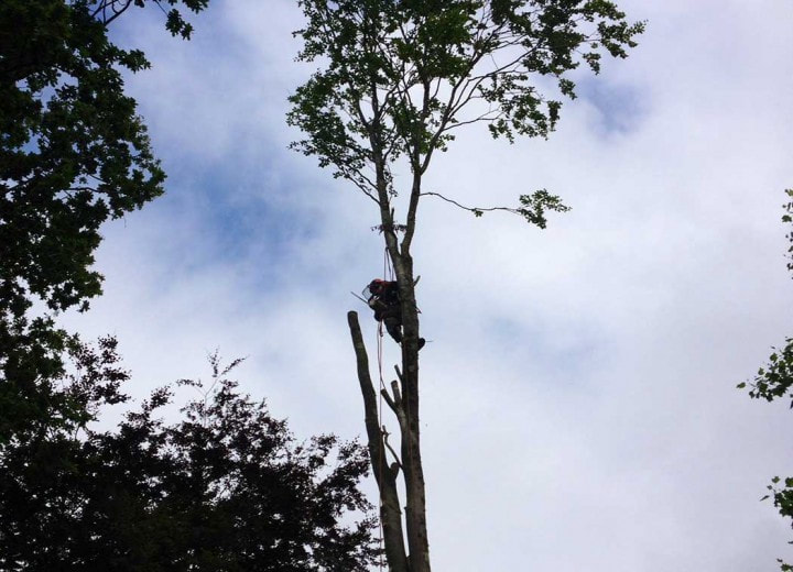Tree Service Work, Greensboro NC